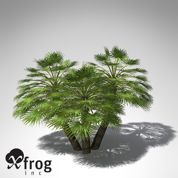mediterranean fan palm plant 3d model - XfrogPlants Mediterranean Fan Palm... by xfrog