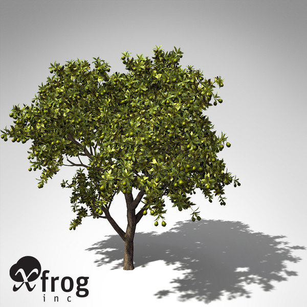 mango tree tropical plant 3d model - XfrogPlants Mango tree... by xfrog