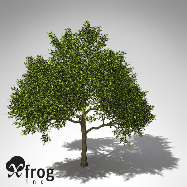 xfrogplants avocado tree tropical plant 3ds - XfrogPlants Avocado tree... by xfrog