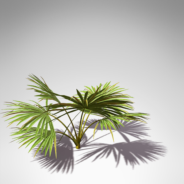maya xfrogplants palmetto palm plant - XfrogPlants Palmetto... by xfrog