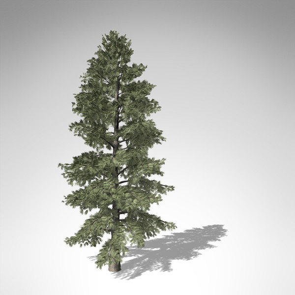3d xfrogplants white fir tree - XfrogPlants White Fir... by xfrog