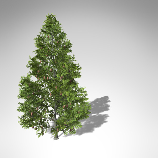 grand fir tree 3d model - XfrogPlants Grand Fir... by xfrog