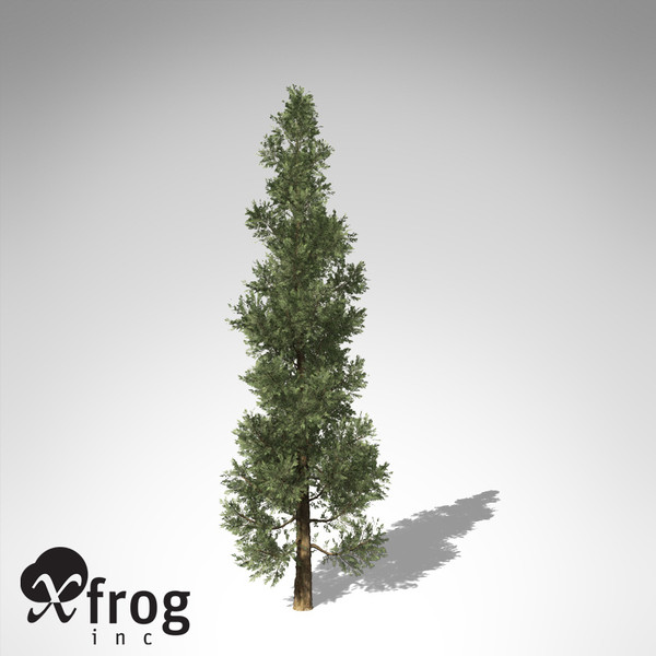 xfrogplants incense cedar tree 3d model - XfrogPlants Incense Cedar... by xfrog