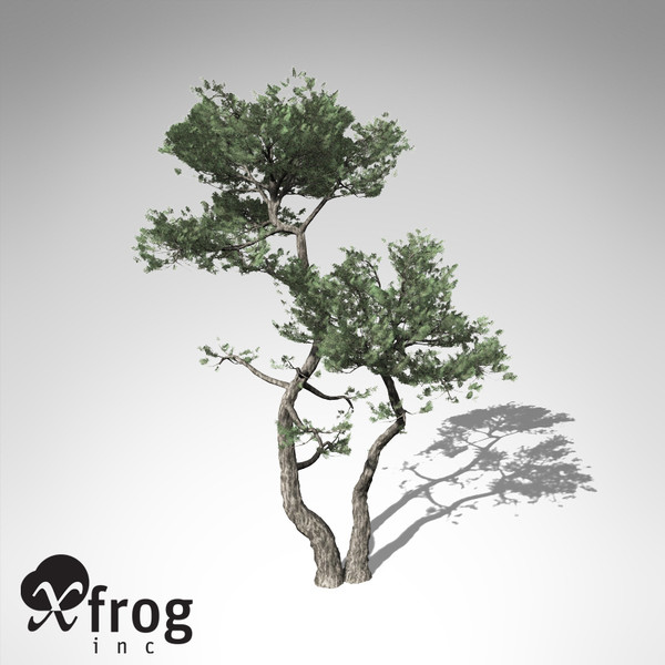 3d model xfrogplants monterey cypress tree - XfrogPlants Monterey Cypress... by xfrog