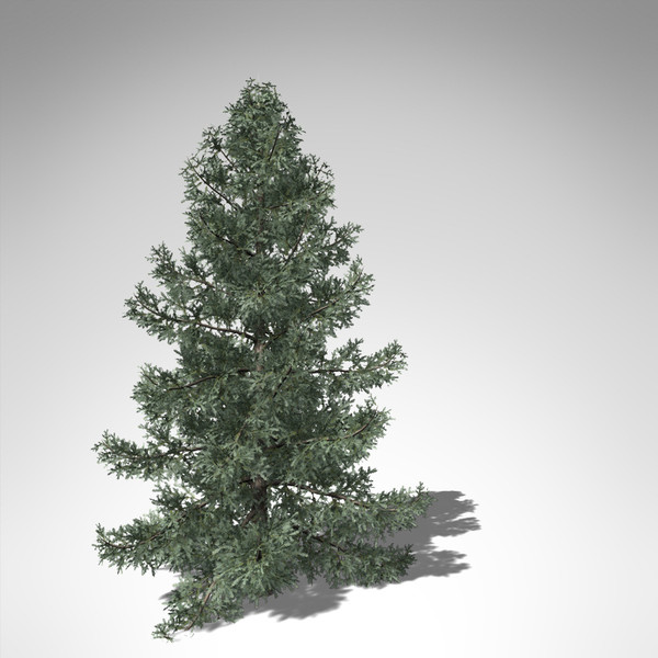 colorado blue spruce tree 3d model - XfrogPlants Colorado Blue Spruce... by xfrog