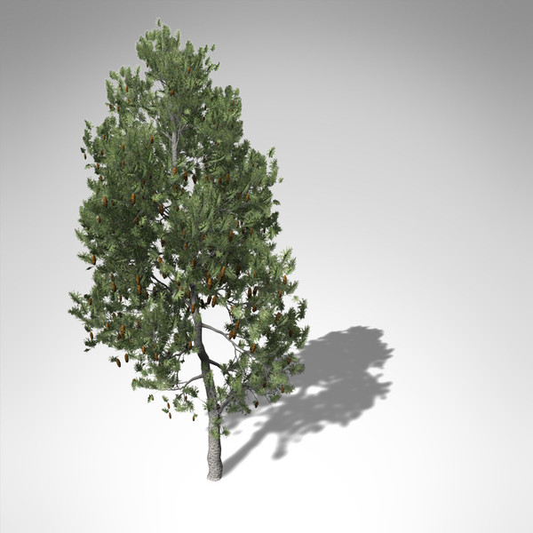 xfrogplants lodgepole pine tree 3d model - XfrogPlants Lodgepole Pine... by xfrog