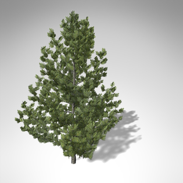 3dsmax xfrogplants coulter pine tree - XfrogPlants Coulter Pine... by xfrog