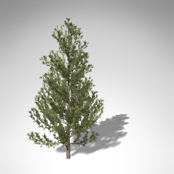 xfrogplants monterey pine tree 3d model - XfrogPlants Monterey Pine... by xfrog