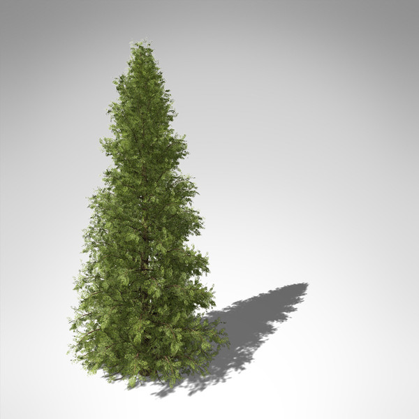 c4d xfrogplants western red cedar - XfrogPlants Western Red Cedar CL... by xfrog