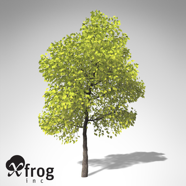 xfrogplants southern catalpa tree 3ds - XfrogPlants Southern Catalpa... by xfrog