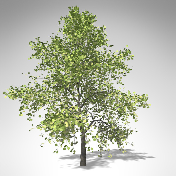 xfrogplants tuliptree tree 3d model - XfrogPlants Tuliptree... by xfrog