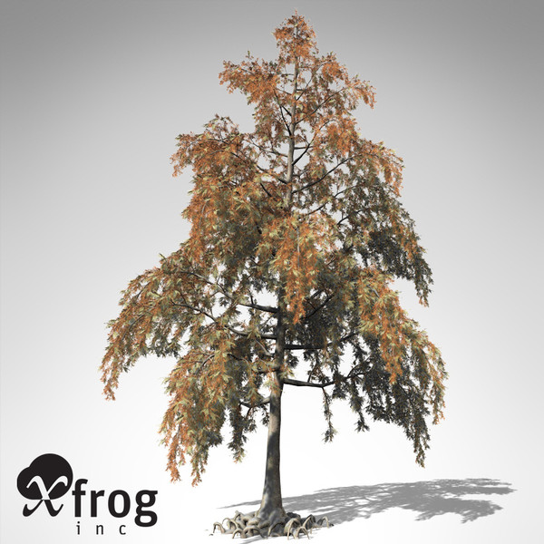xfrogplants bald cypress tree 3ds - XfrogPlants Bald Cypress... by xfrog