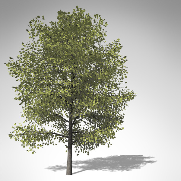 xfrogplants american linden tree 3d model - XfrogPlants American Linden... by xfrog