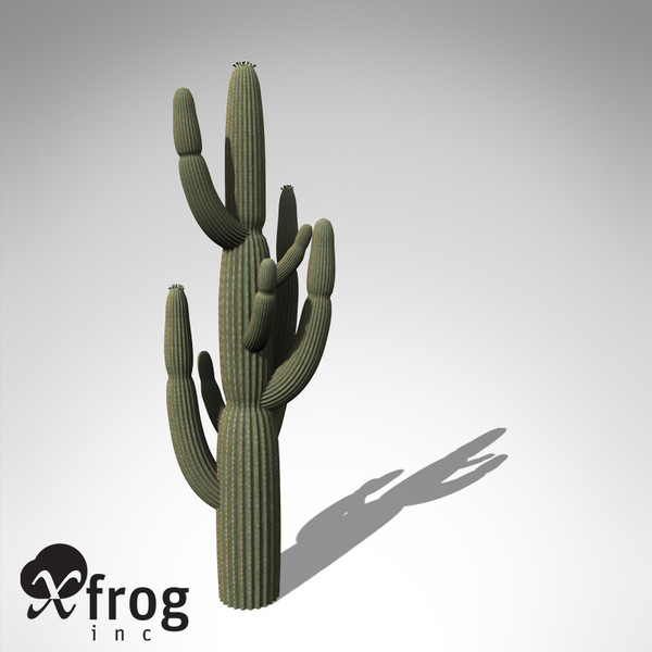 giant saguaro plant 3d model - XfrogPlants Giant Saguaro... by xfrog