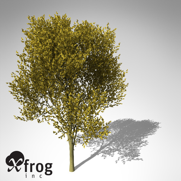 maya xfrogplants paloverde tree - XfrogPlants Paloverde... by xfrog