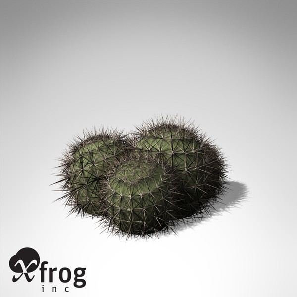 strawberry hedgehog plant 3d model - XfrogPlants Strawberry Hedgehog... by xfrog