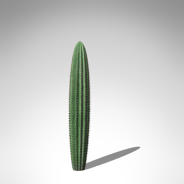 organ pipe cactus plant 3d model - XfrogPlants Organ Pipe Cactus... by xfrog