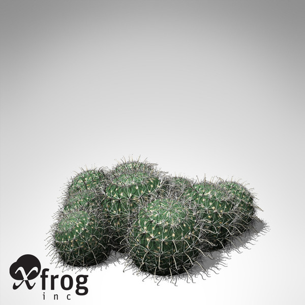 XfrogPlants Millers Pincushion