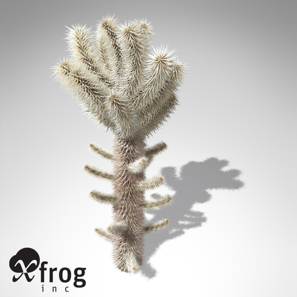 XfrogPlants Teddy Bear Cholla