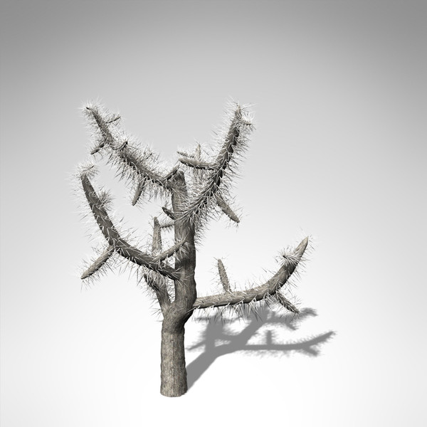 xfrogplants jumping cholla plant 3d model - XfrogPlants Jumping Cholla... by xfrog