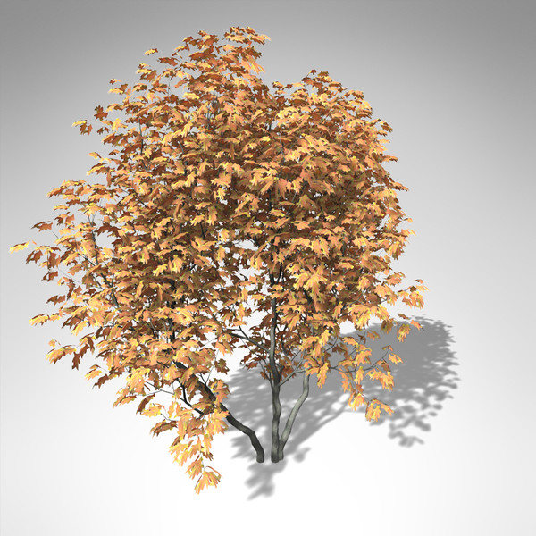 lightwave xfrogplants vine maple tree - XfrogPlants Vine Maple... by xfrog