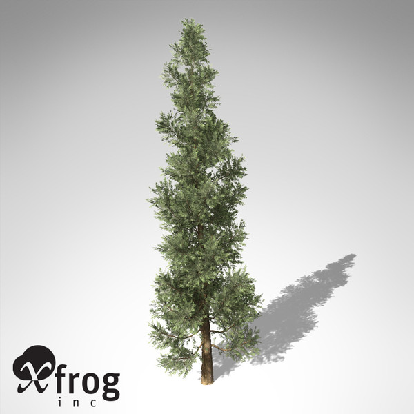 xfrogplants incense cedar tree c4d - XfrogPlants Incense Cedar... by xfrog