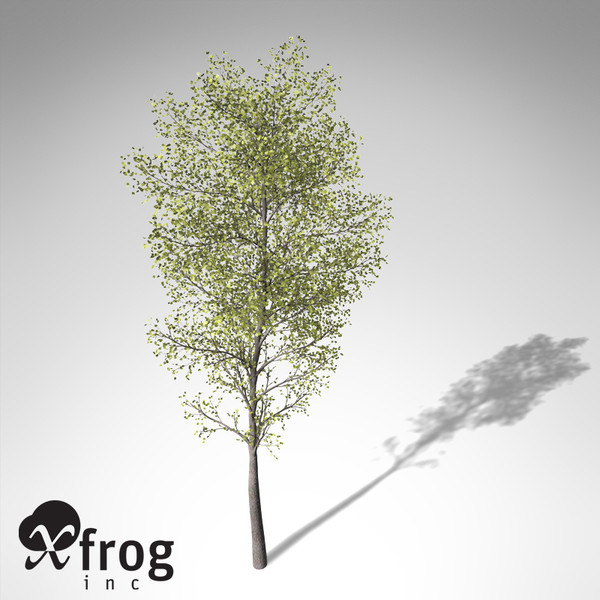3d model xfrogplants balsam poplar tree - XfrogPlants Balsam Poplar... by xfrog