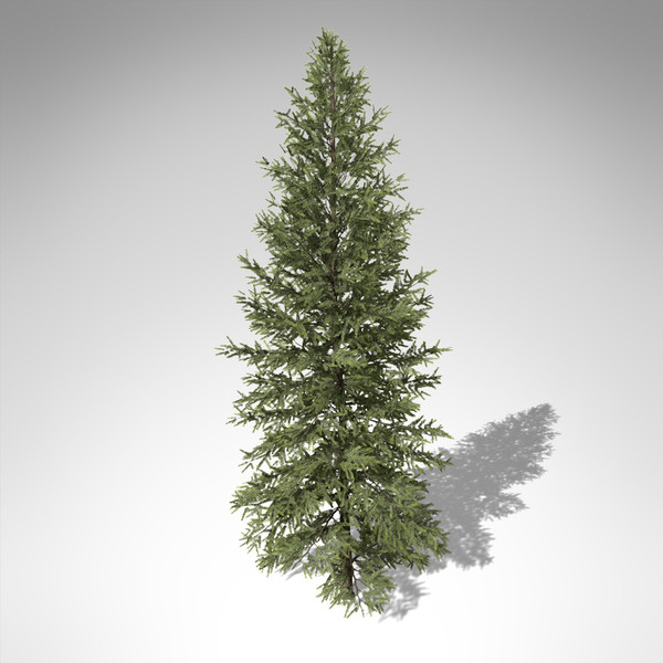 3d model xfrogplants douglas fir tree - XfrogPlants Douglas Fir... by xfrog