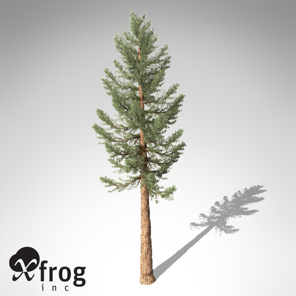 giant sequoia tree planted 3d model - XfrogPlants Giant Sequoia... by xfrog