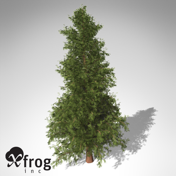 3d model of xfrogplants western red cedar - XfrogPlants Western Red Cedar... by xfrog