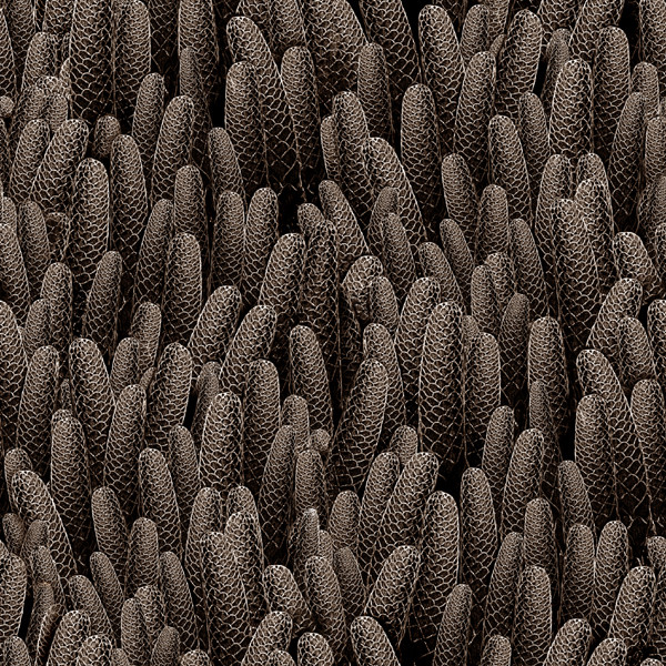 Textile pattern buds