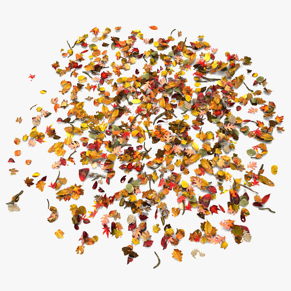 Autumn Leaves On Ground In Circle