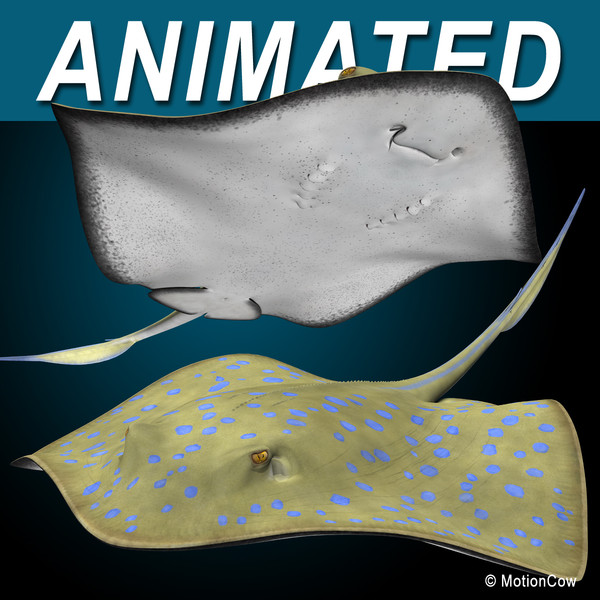 3d realistic bluespotted stingray model