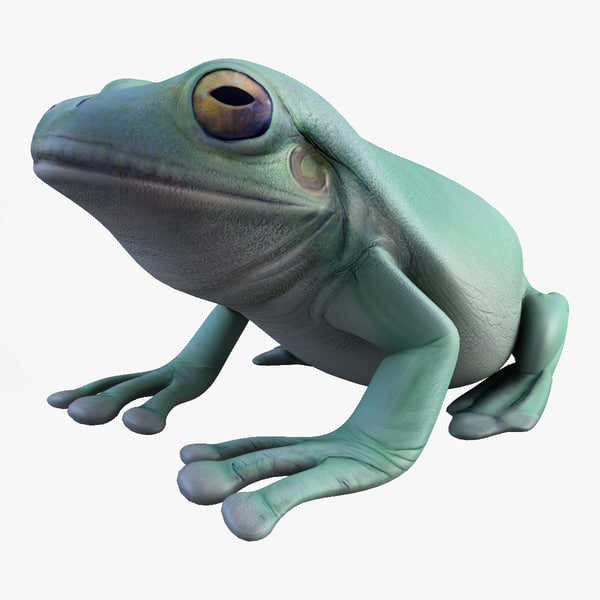 litoria caerulea green tree frog 3d model