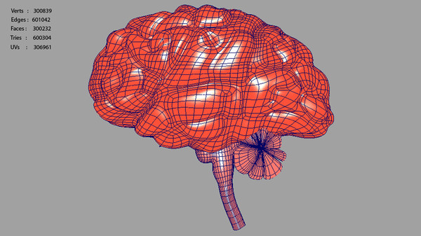 brain anatomy 3d model - Brain... by Activepoly