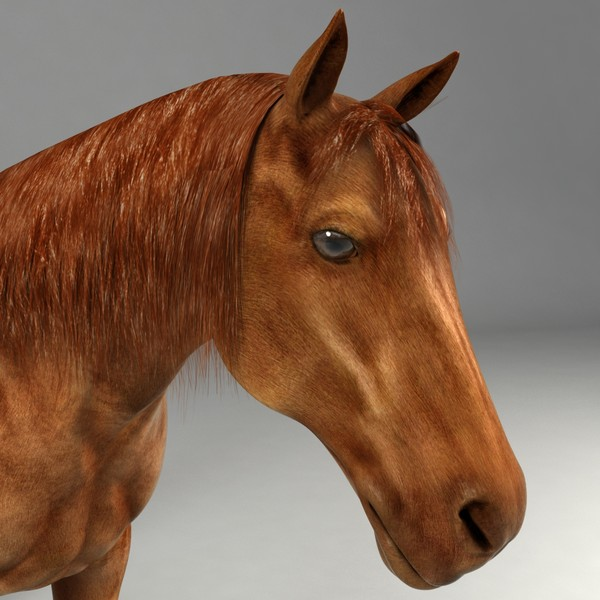 realistical horse rigged 3d 3ds