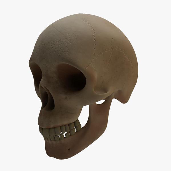 max human skull head