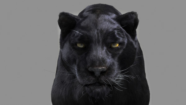 3d black panther cat model