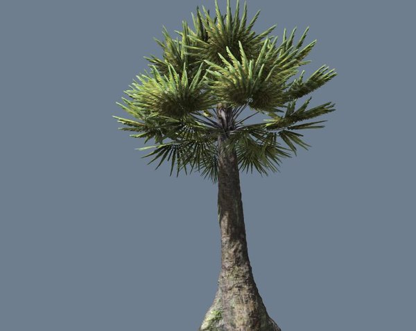 palm tree pretty 3d fbx