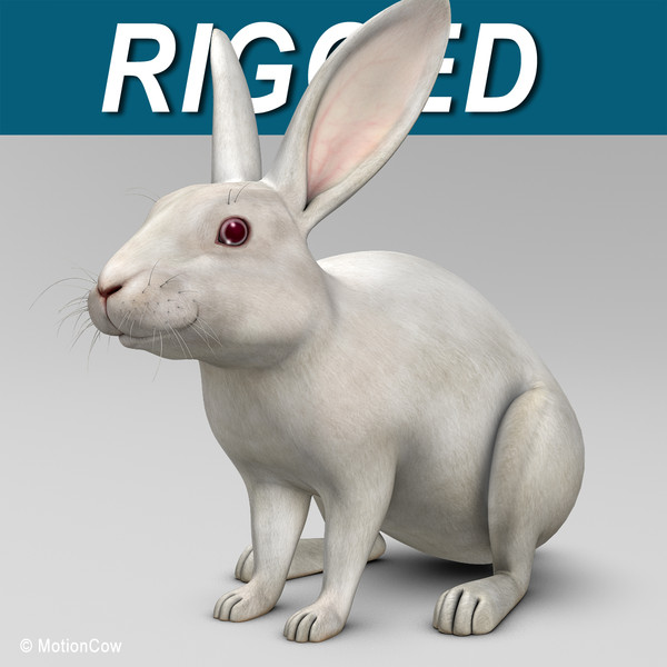 Rabbit ( White )