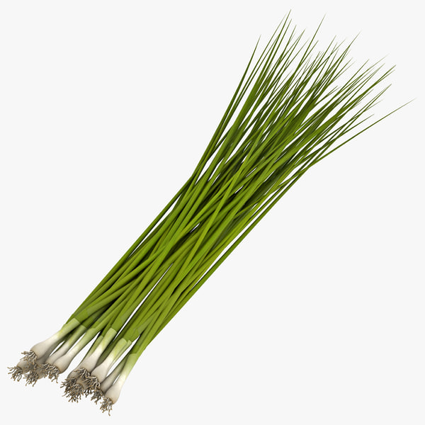 3d scallion vegetable modeled model