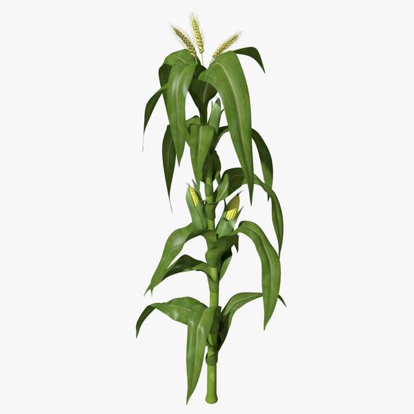 Pin corn stalks clip art on pinterest