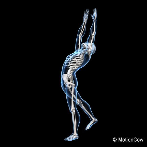 ... skeleton bones skeletal system bone diagram allow skeleton system