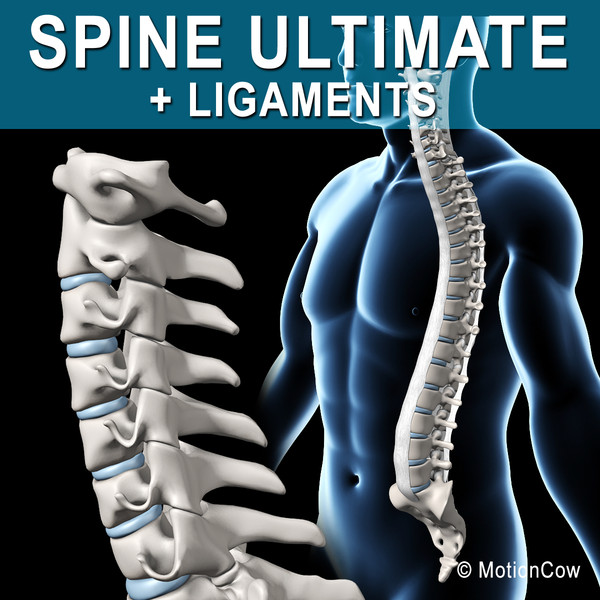 Spine Ultimate