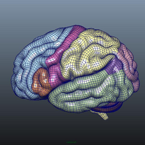 Brain Details 3d Model