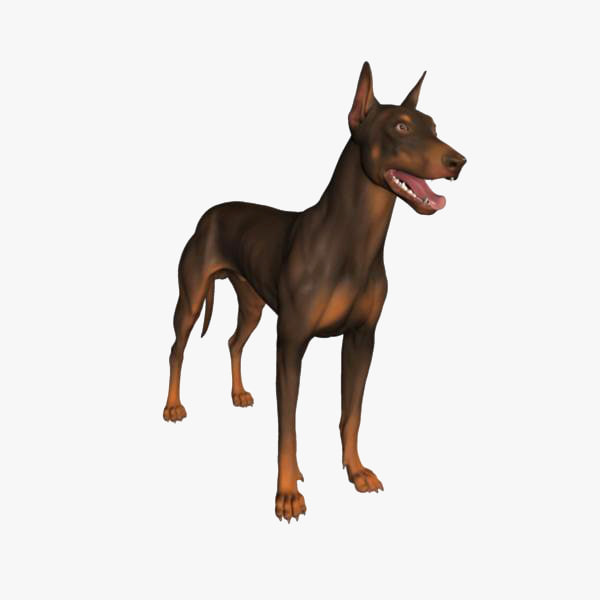 3d model doberman dog