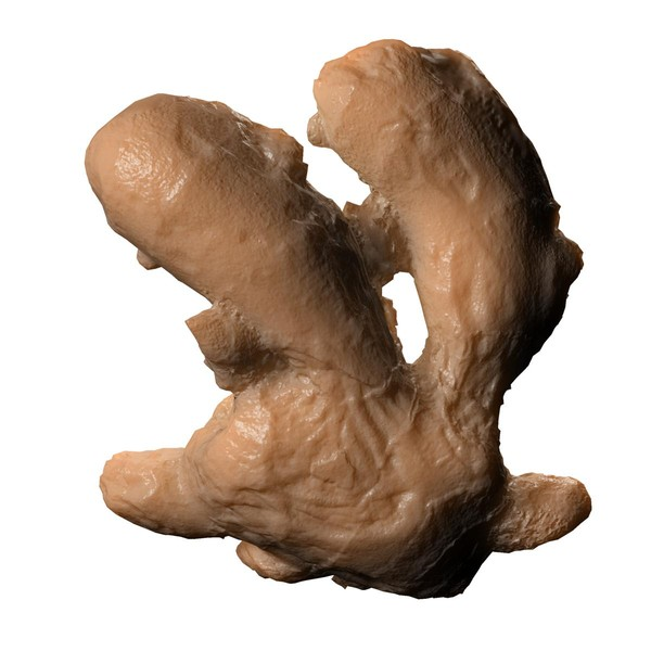 ginger root 3d 3ds - ginger... by edikm1