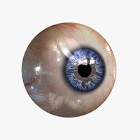 3d model of realistic human eye 20