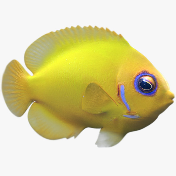 3dsmax lemon lauwiliwili tropical fish