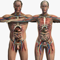 3d model male female anatomy body